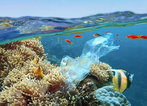 Fish near a coral reef with plastic litter.