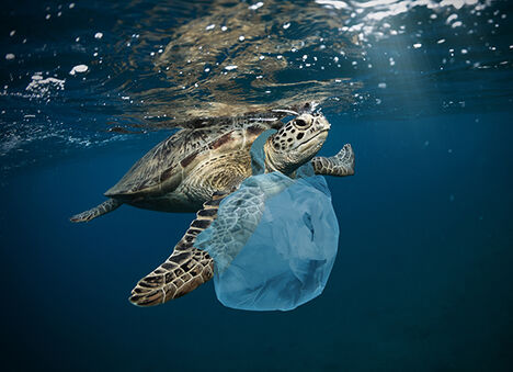 Turtle with plastic bag around its neck.